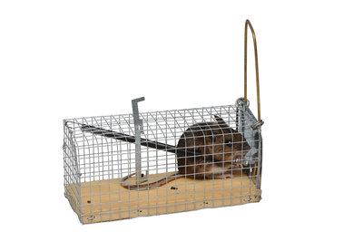 Muizenvangkooitje met houten bodem - Pascal Hemel Volièreshop